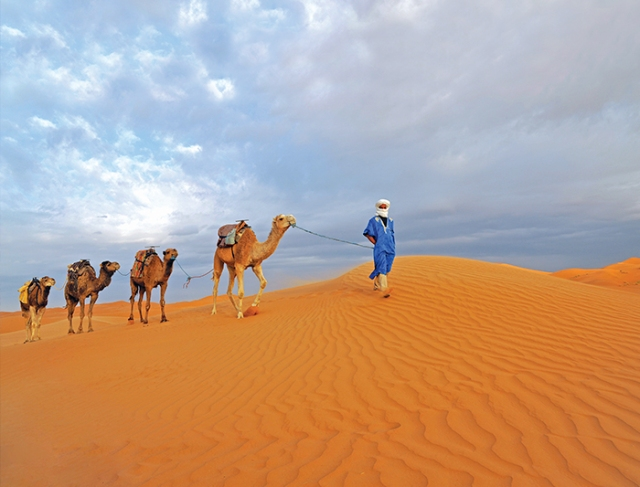 middle-east_morocco_camel-dune